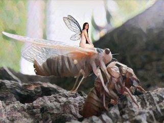 cicada molting fairy girl fantasy