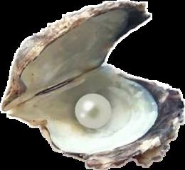 perla freetoedit