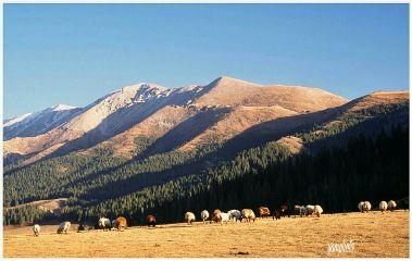 mountain landscape horses photography nature