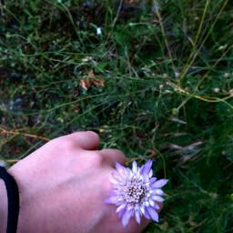 freetoedit flower tumblr