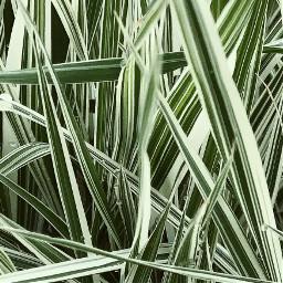 FreeToEdit green