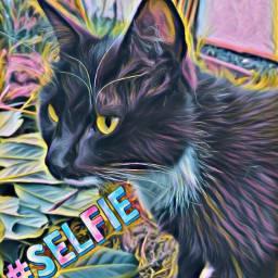 selfiestickerremix freetoedit cat animal art