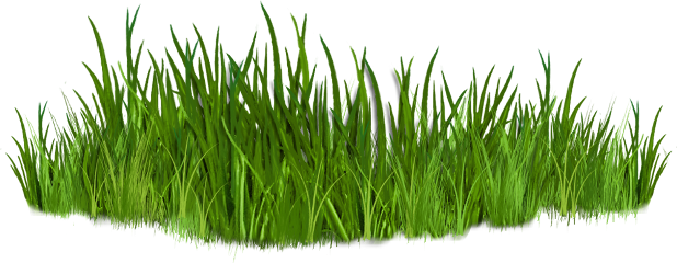 green grass png - 1000×388