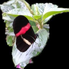 byliriosbellos fromcostarica withpicsart freetoedit