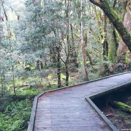 freetoedit myphoto tasmania trees walk