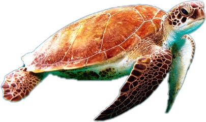 ftestickers turtle animal fish