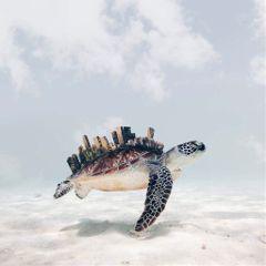 turtles motivation animals skyline