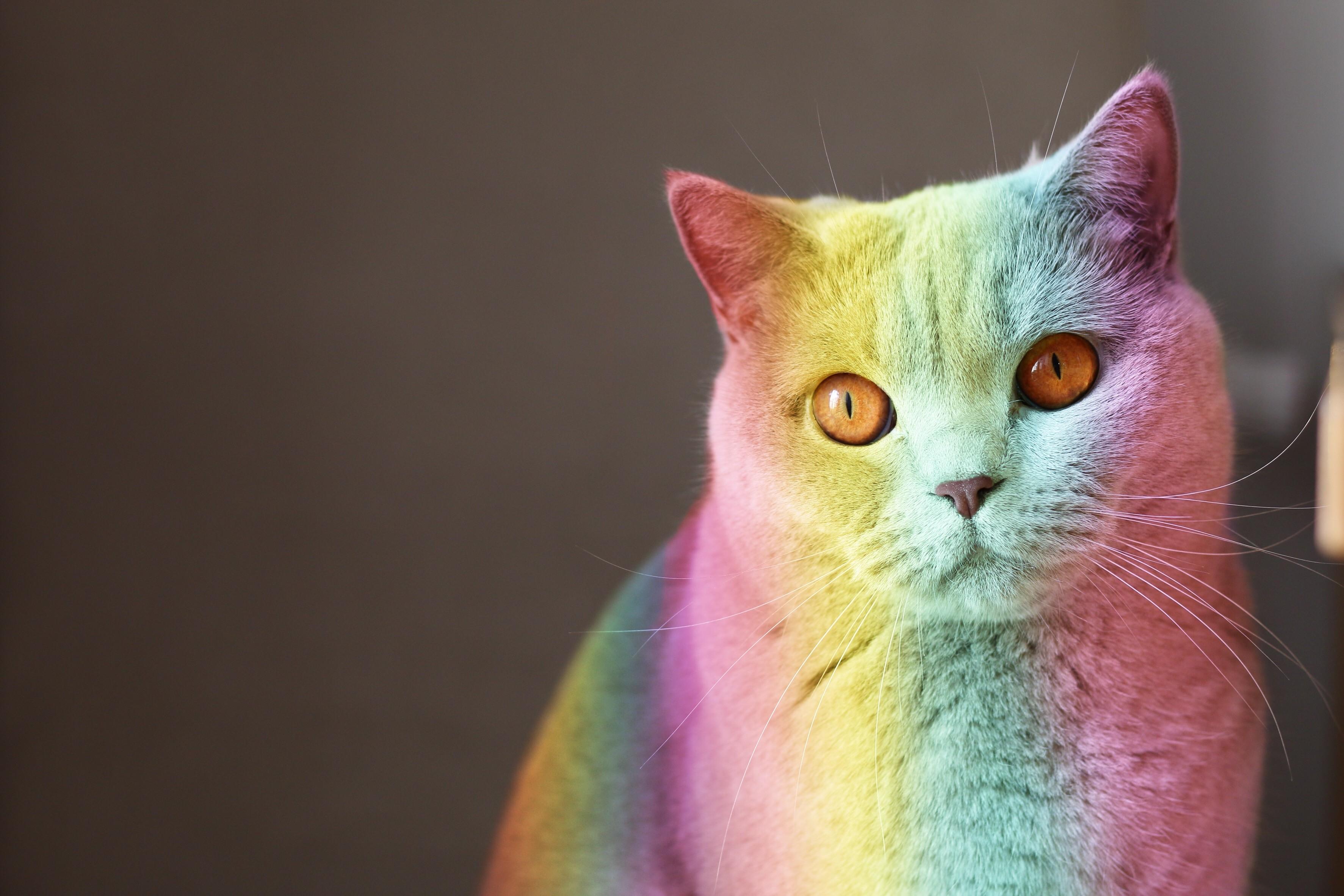#rainbowcat #FreeToEdit #rainbow #colors