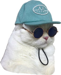 cat sadboys roundglasses freetoedit