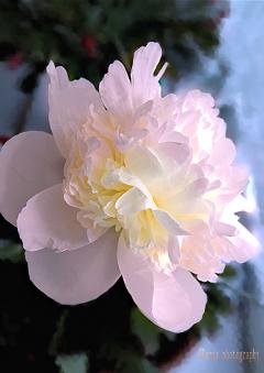 flower colorful artistic art