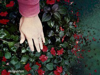 freetoedit flower lovely redandgreen mygarden