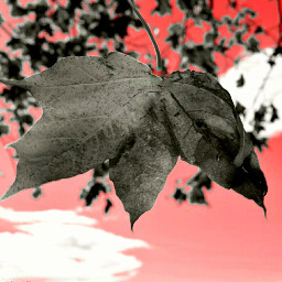 liście leawes leaf liść polishphotography