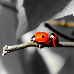 suwalszczyzna mojeklimaty spring wiosna naturephotography