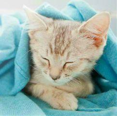 cutee kitty baby #freetoedit freetoedit baby