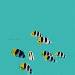 freetoedit myedit summer fish lightblue