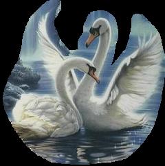 swan freetoedit