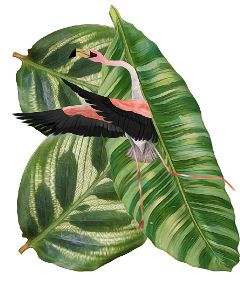 pinkflamingo tropicalleaves dance surreal tropical