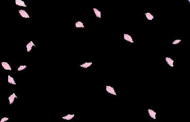 petals pink freetoedit