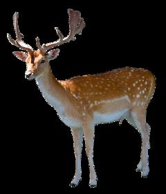 deer freetoedit