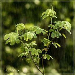 sprinkler rain rainyday plant nature