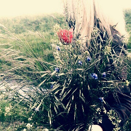 wildflowers forest flowers flowerbouquet hiding