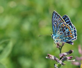 freetoedit butterfly