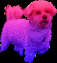 dog coloredpets pets puppy colorgradient