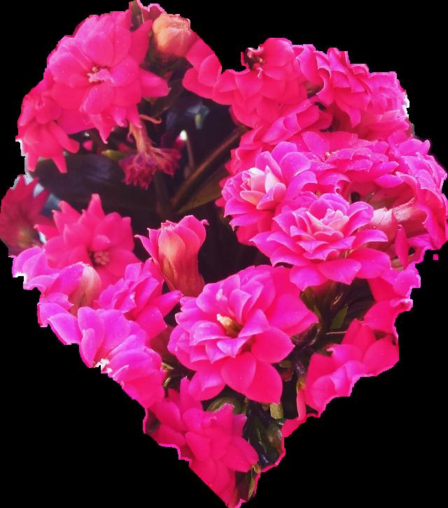 #flower #pink #heart #freetoedit