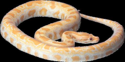 ftestickers snake freetoedit