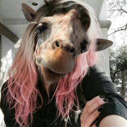 giraffestickerremix ekc жираф freetoedit