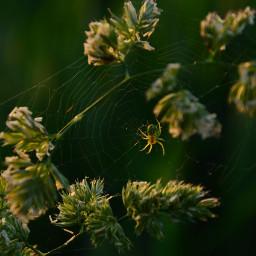 spider animal nature sundown