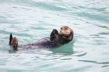 freetoedit otter summer animal fun