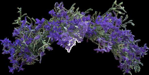 #beautiful #flowercrown #flowerpower #flowers #crown #facefilter #selfie #pretty #spring #purple #wildflowers