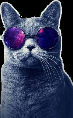 cat space spacecat amazing freetoedit