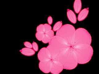 pink freetoedit