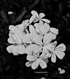 photography travel nature flowers blackandwhite...