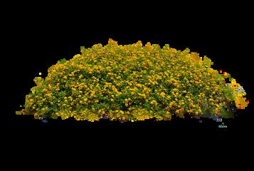plants yellow flowers freetoedit