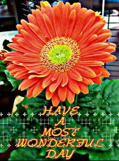 flower daisy orange crispeffect hdr
