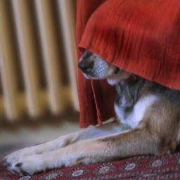dpcguiltydogs my dog guilty hide