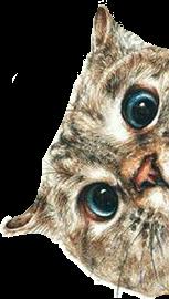 gato cat freetoedit