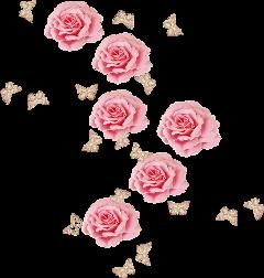 roses pink freetoedit
