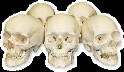 skull skulls creepy scary bones