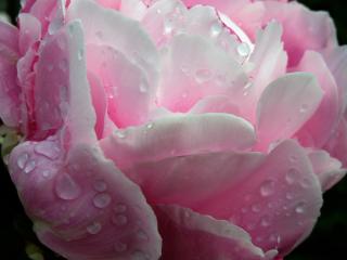 flower wet upclose freetoedit