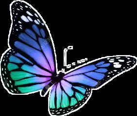 butterfly cute freetoedit