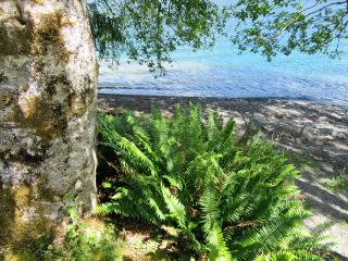 ferns lake freetoedit
