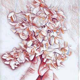 sketchymagiceffect sketchy effect sketchyeffect flowers