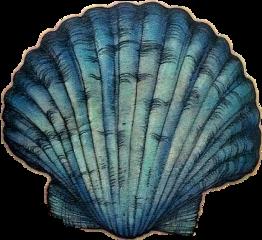 seashell freetoedit