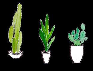 tumblr plants cactuses🌵 freetoedit cactuses