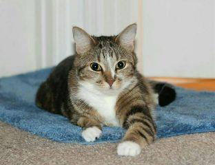 pets stripes catsofpicsart