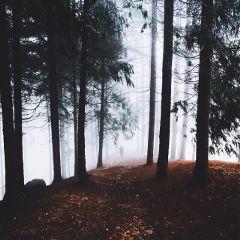 freetoedit eventure forest